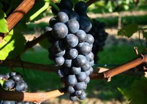 Weingut Weinreuter
