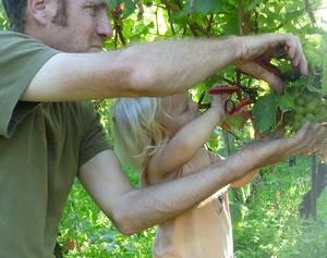 Jakob Meier Weinbau mit Eigenkelterung