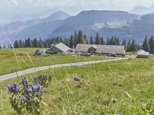 Alpwirtschaft Chäserenholz