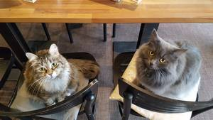 Cats Cafe Karlsruhe