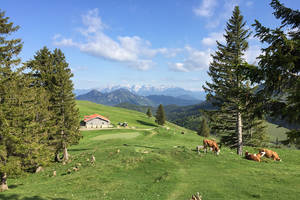 Huber Alm