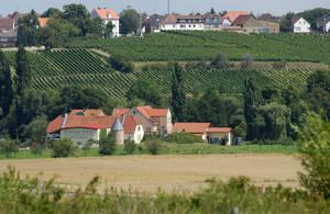 Weingut Joachim Flick