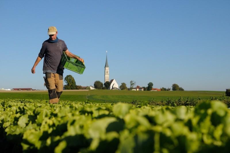 Salatfeld mit Hintergrund Kirchreit