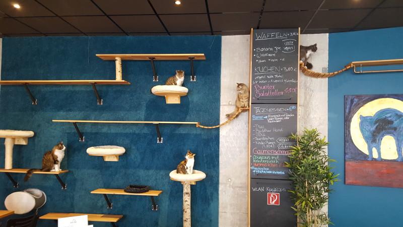 Cats Café Karlsruhe