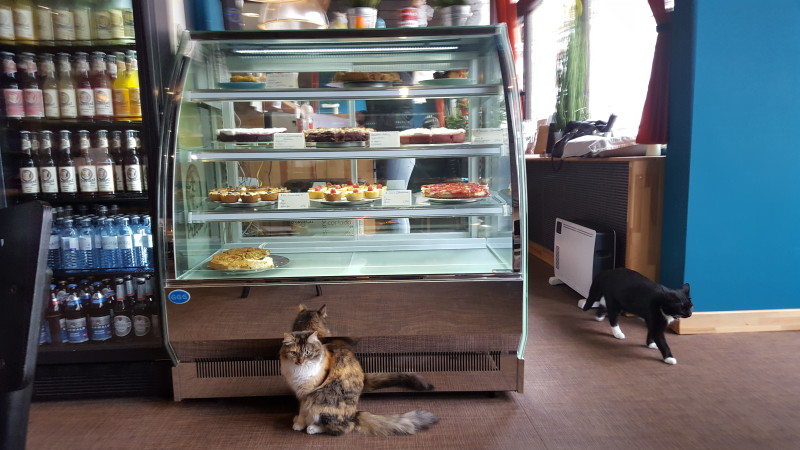 Katzenkaffee Karlsruhe