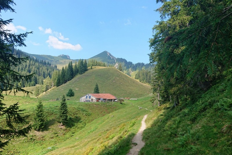 Acker Alm mit Blick auf den Geigelstein © Chiemsee-Alpenland Tourismus