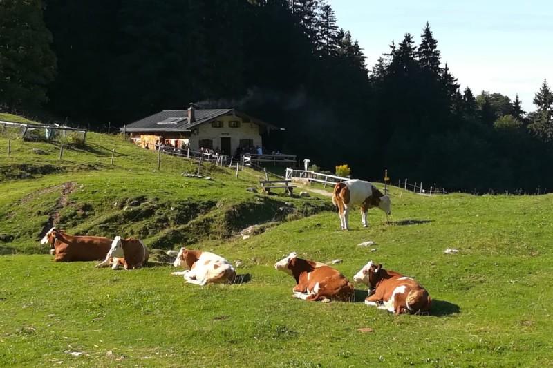 Staudacher Alm © Chiemsee-Alpenland Tourismus