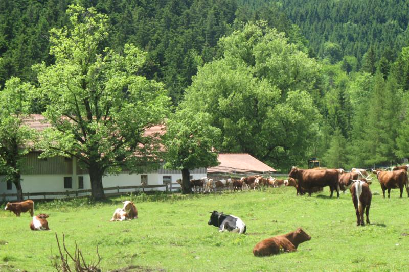 Schlipfgrubalm - © Chiemsee-Alpenland Tourismus