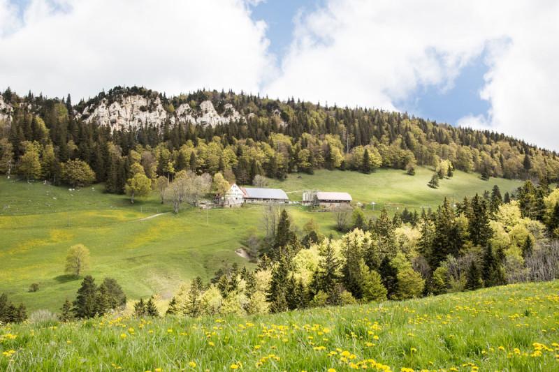 Berggasthof Hinter-Weissenstein